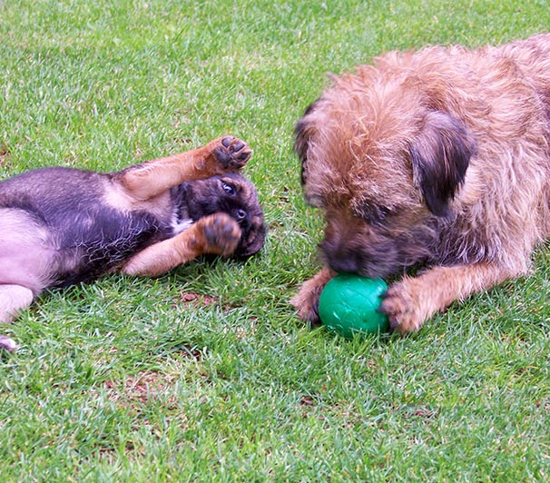 terriers